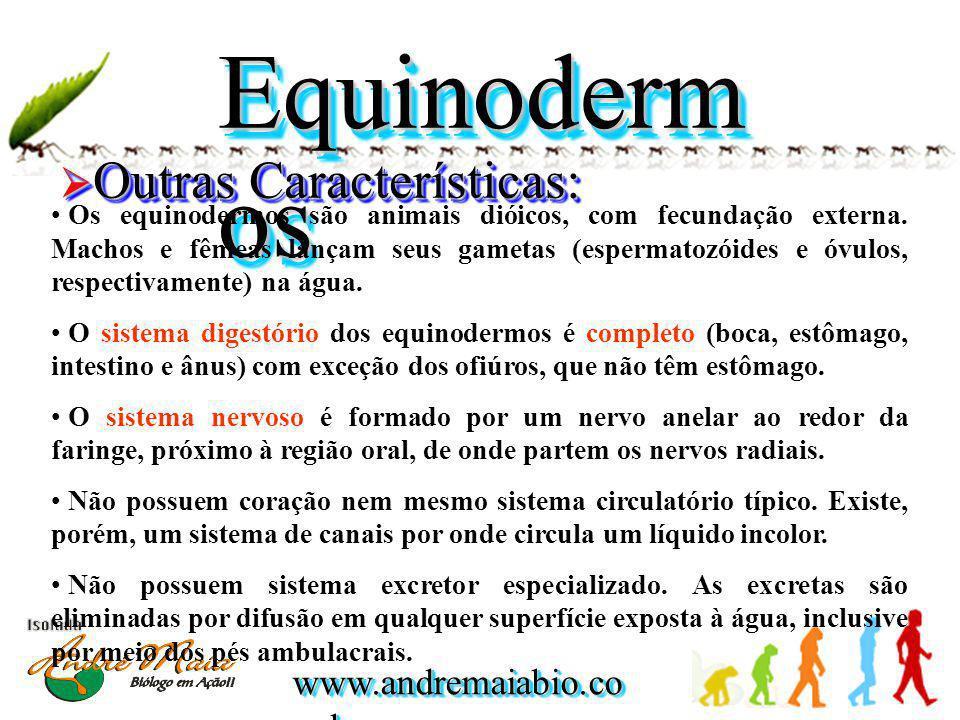 Equinodermos Outras Características: