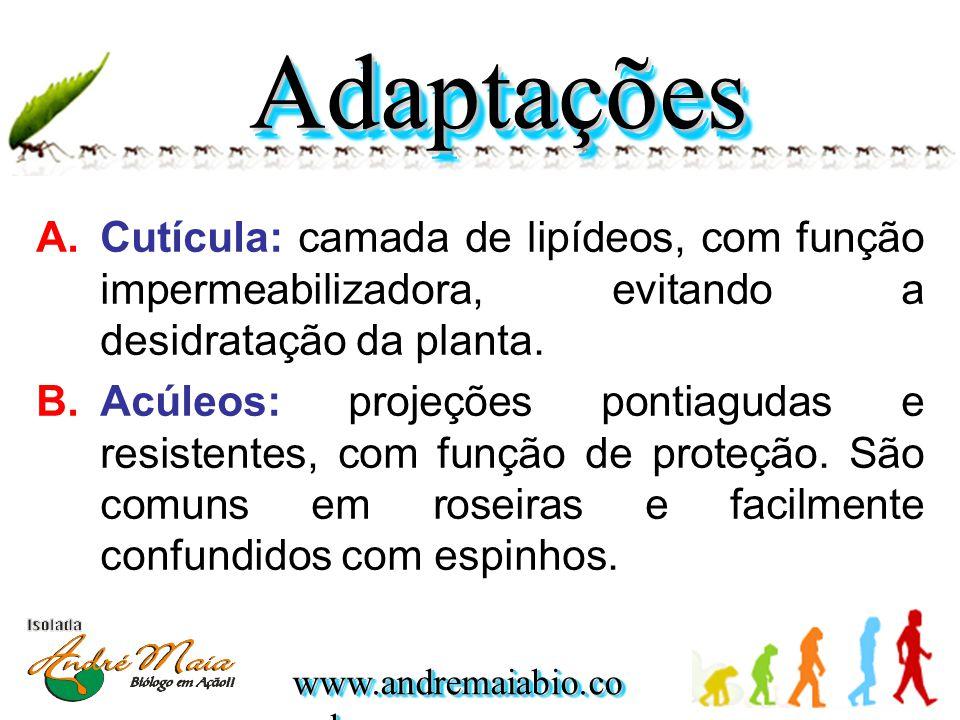 Adaptações Cutícula: camada de lipídeos, com função impermeabilizadora, evitando a desidratação da planta.