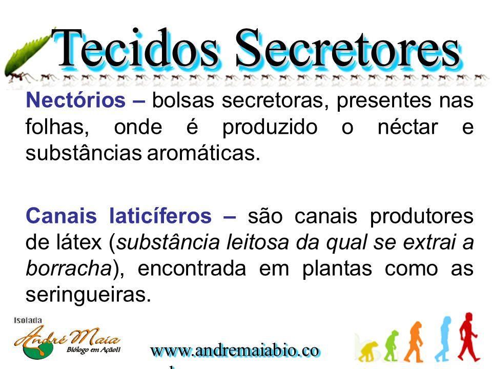 Tecidos Secretores Nectórios – bolsas secretoras, presentes nas folhas, onde é produzido o néctar e substâncias aromáticas.