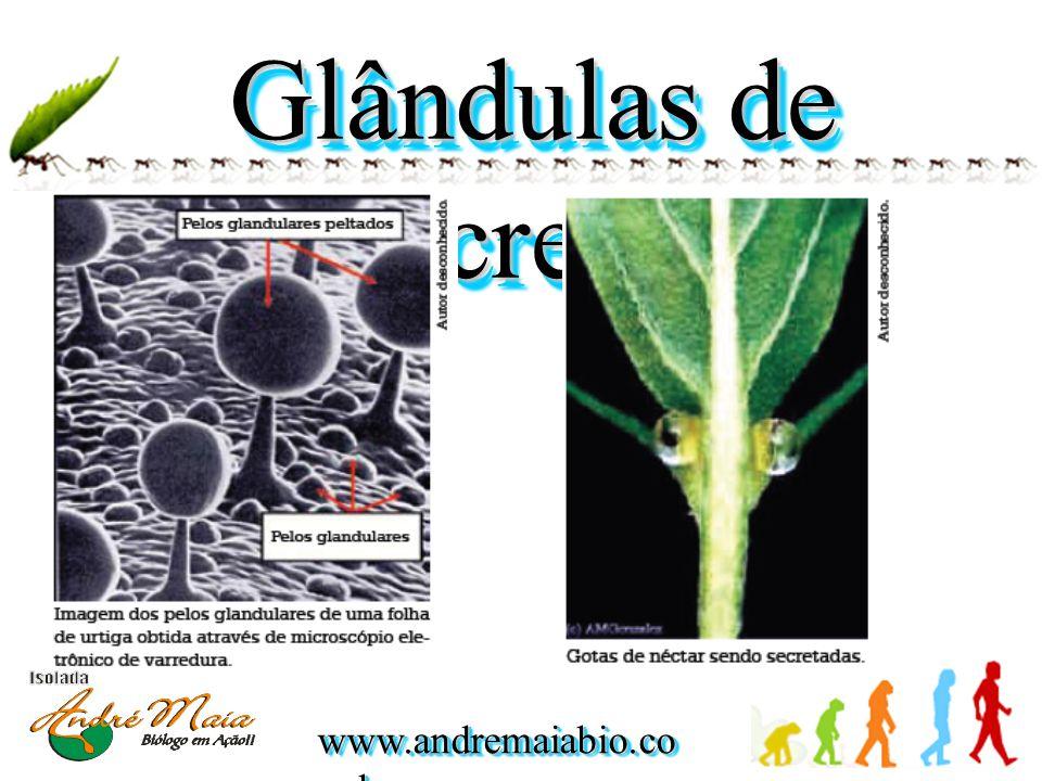 Glândulas de Secreção