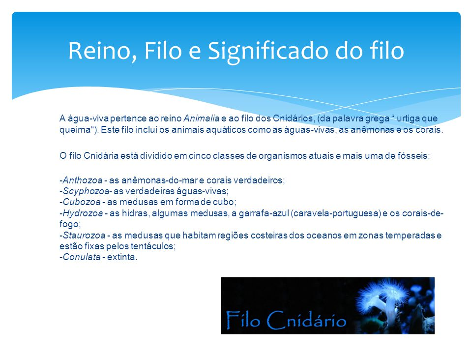 Reino, Filo e Significado do filo