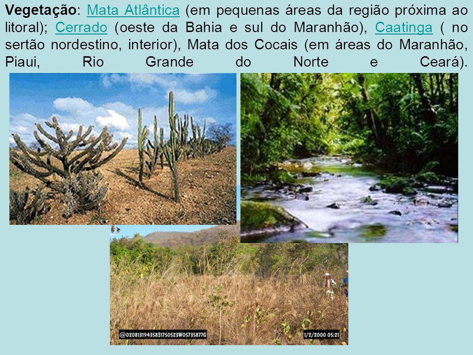 Vegetação: Mata Atlântica (em pequenas áreas da região próxima ao litoral); Cerrado (oeste da Bahia e sul do Maranhão), Caatinga ( no sertão nordestino, interior), Mata dos Cocais (em áreas do Maranhão, Piaui, Rio Grande do Norte e Ceará).