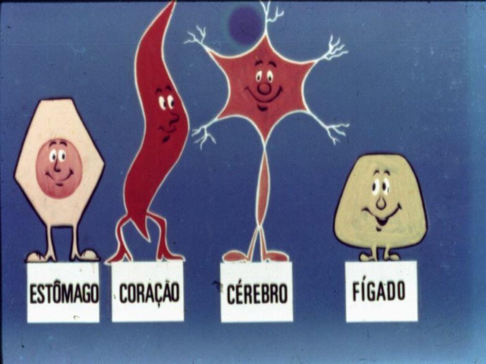 O cigarro afeta cada célula do nosso corpo.