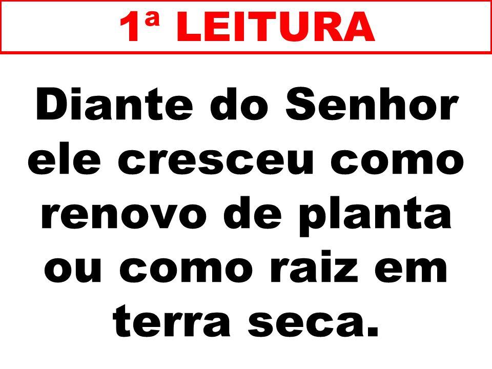 1ª LEITURA Diante do Senhor ele cresceu como renovo de planta ou como raiz em terra seca. 24