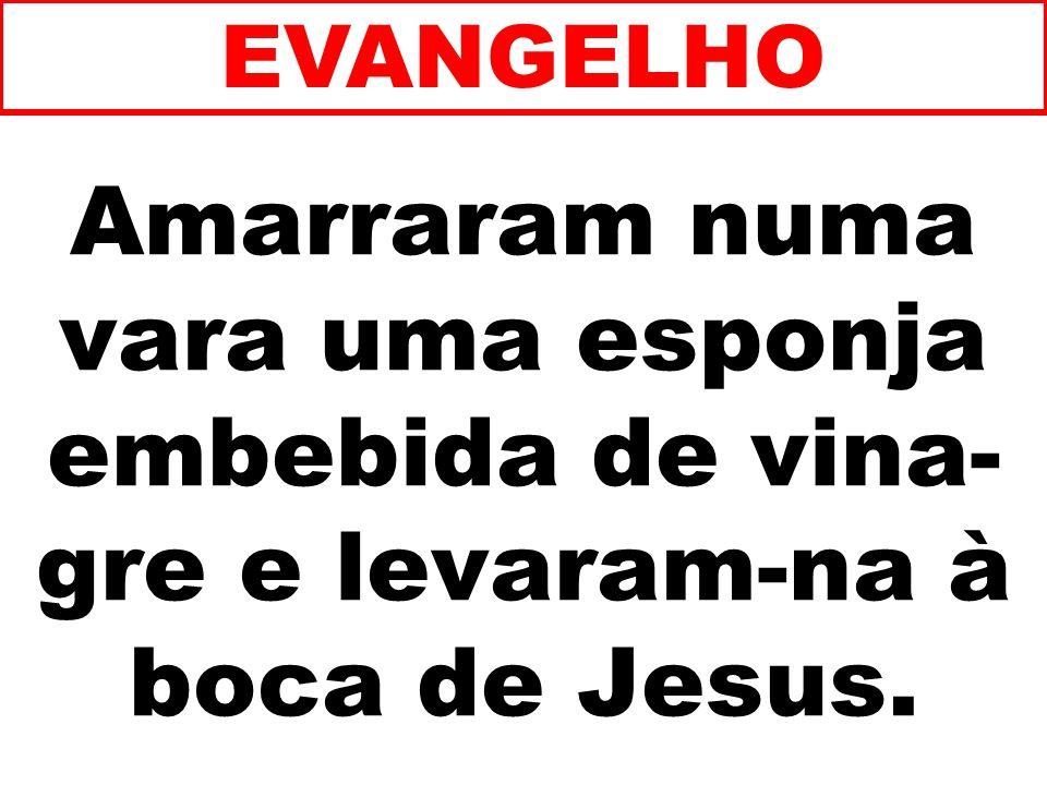 EVANGELHO Amarraram numa vara uma esponja embebida de vina-gre e levaram-na à boca de Jesus. 244