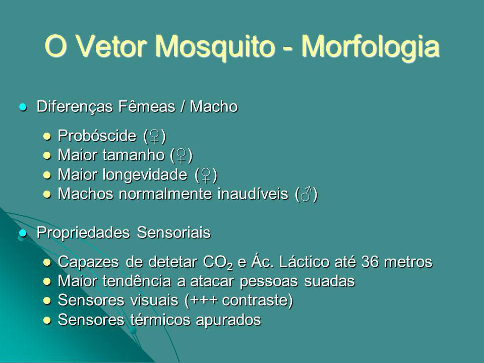 O Vetor Mosquito - Morfologia