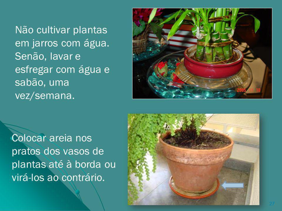 Não cultivar plantas em jarros com água