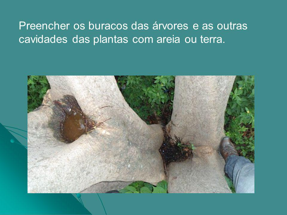 Preencher os buracos das árvores e as outras cavidades das plantas com areia ou terra.