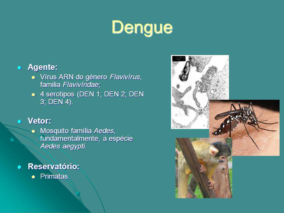 Dengue Agente: Vetor: Reservatório: