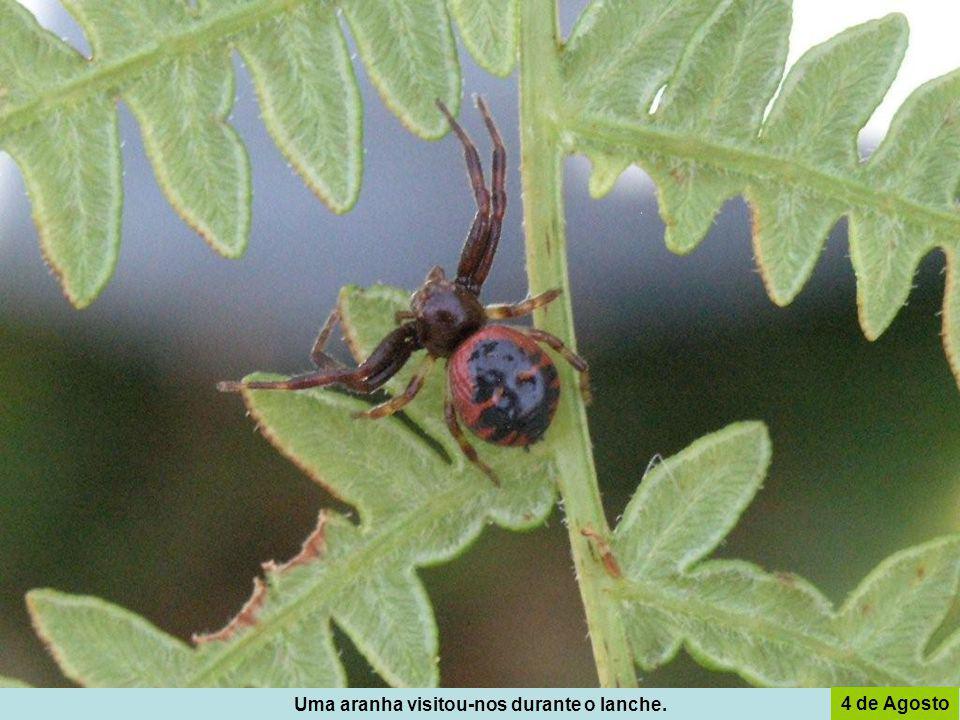 Uma aranha visitou-nos durante o lanche.
