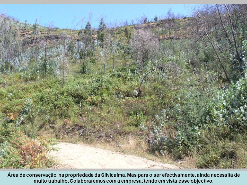 Área de conservação, na propriedade da Silvicaima