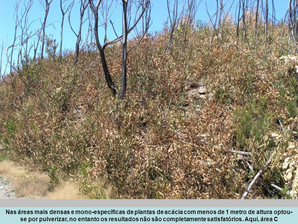 Nas áreas mais densas e mono-específicas de plantas de acácia com menos de 1 metro de altura optou-se por pulverizar, no entanto os resultados não são completamente satisfatórios.