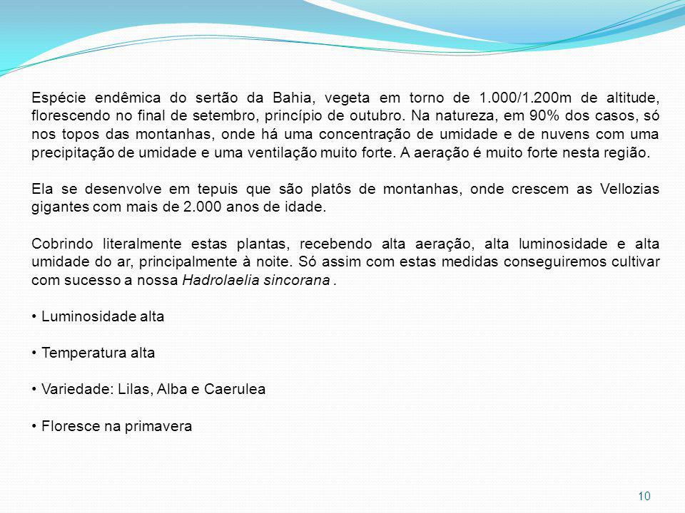 Espécie endêmica do sertão da Bahia, vegeta em torno de 1. 000/1