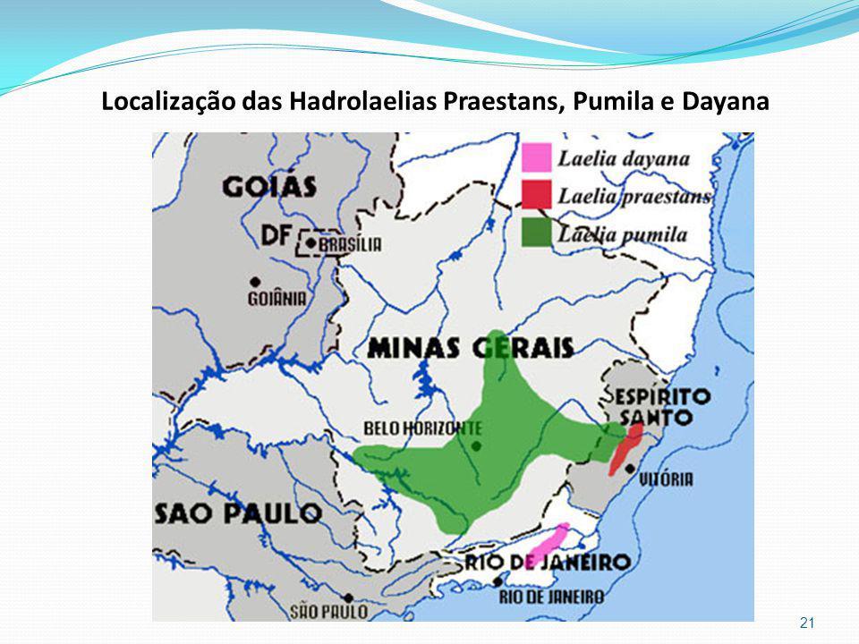 Localização das Hadrolaelias Praestans, Pumila e Dayana