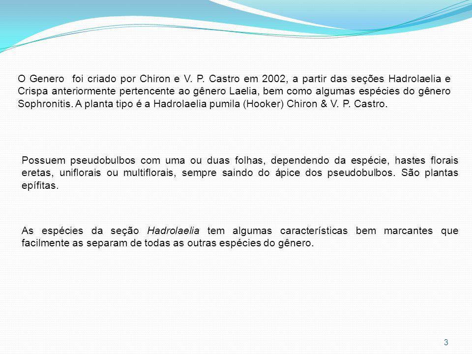 O Genero foi criado por Chiron e V. P