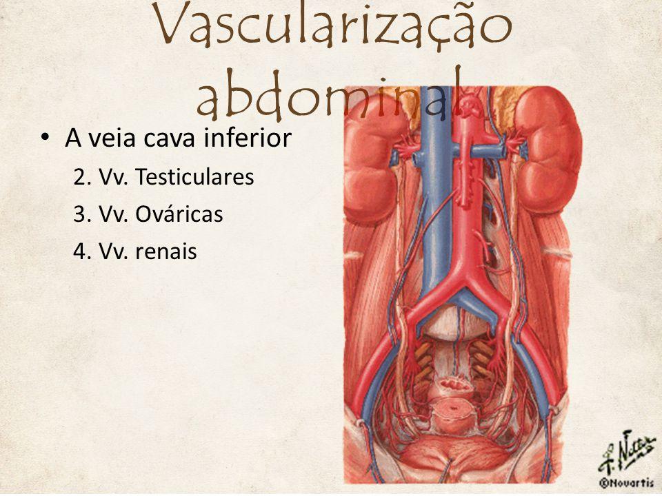 Vascularização abdominal
