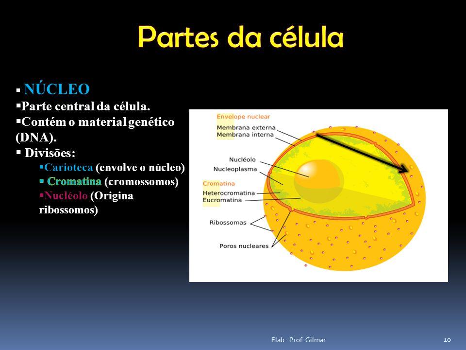 Partes da célula Parte central da célula.