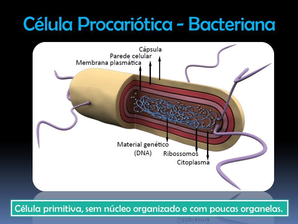 Célula Procariótica - Bacteriana