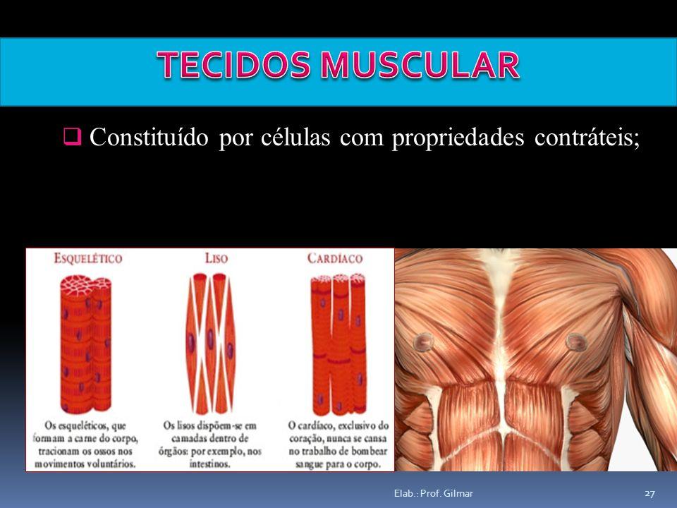 TECIDOS MUSCULAR Constituído por células com propriedades contráteis;