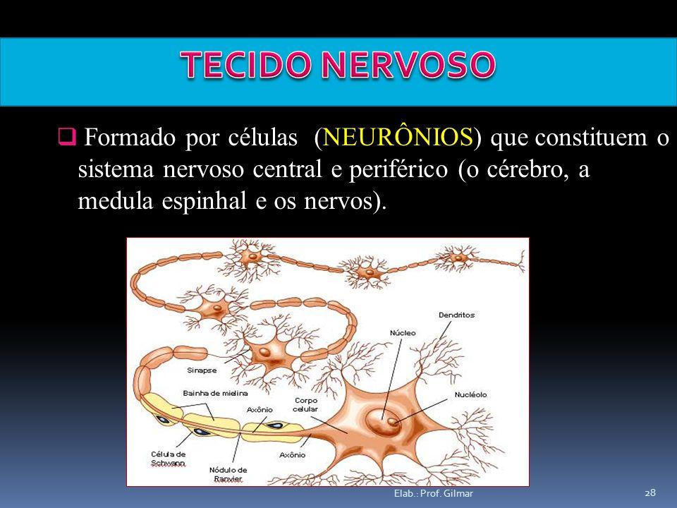 TECIDO NERVOSO Formado por células (NEURÔNIOS) que constituem o sistema nervoso central e periférico (o cérebro, a medula espinhal e os nervos).