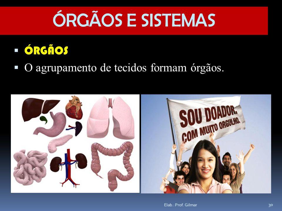 ÓRGÃOS E SISTEMAS ÓRGÃOS O agrupamento de tecidos formam órgãos.