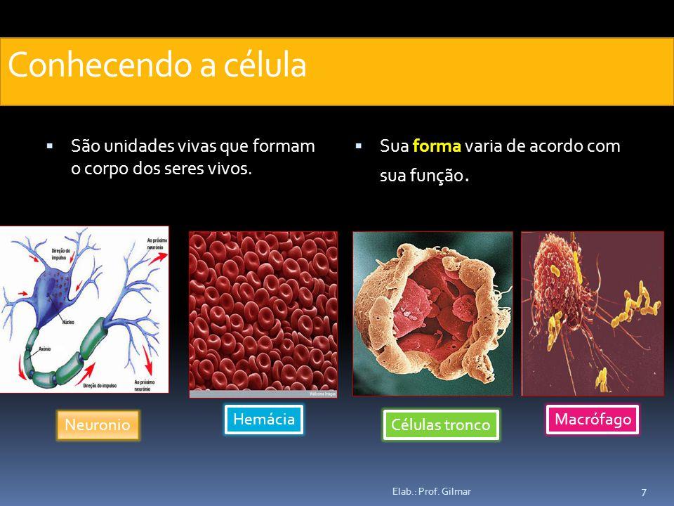 Conhecendo a célula São unidades vivas que formam o corpo dos seres vivos. Sua forma varia de acordo com sua função.