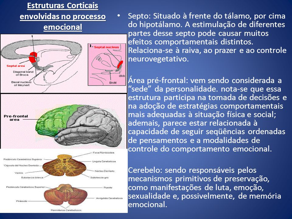 Estruturas Corticais envolvidas no processo emocional