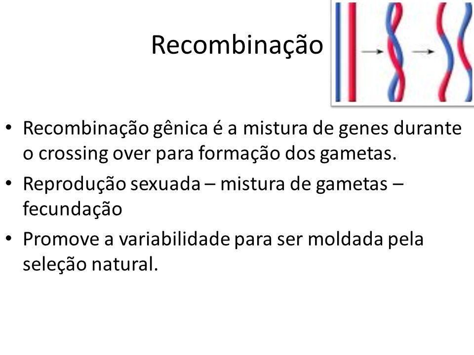 Recombinação Recombinação gênica é a mistura de genes durante o crossing over para formação dos gametas.