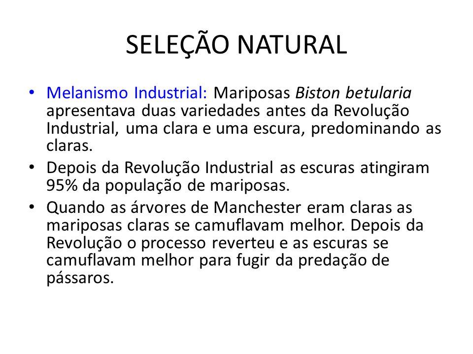 SELEÇÃO NATURAL