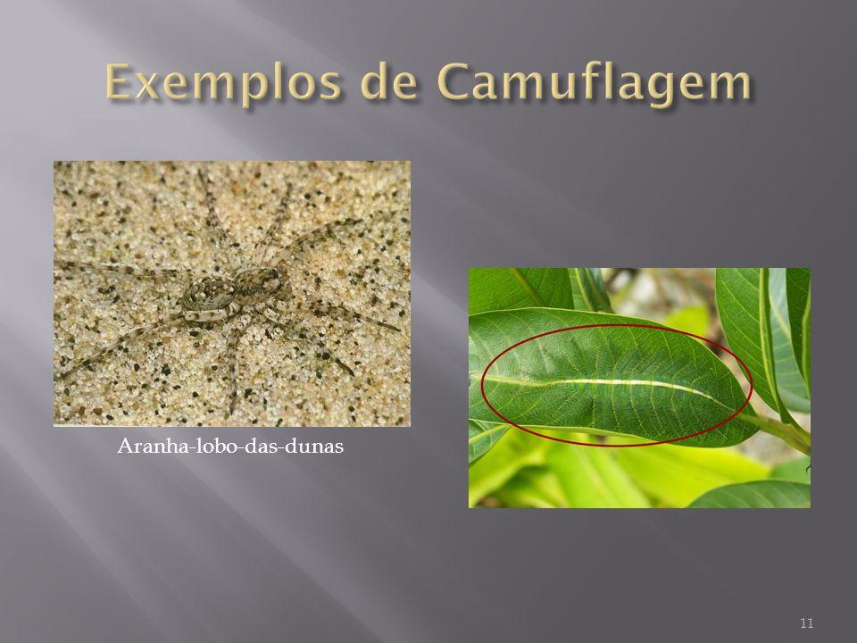 Exemplos de Camuflagem