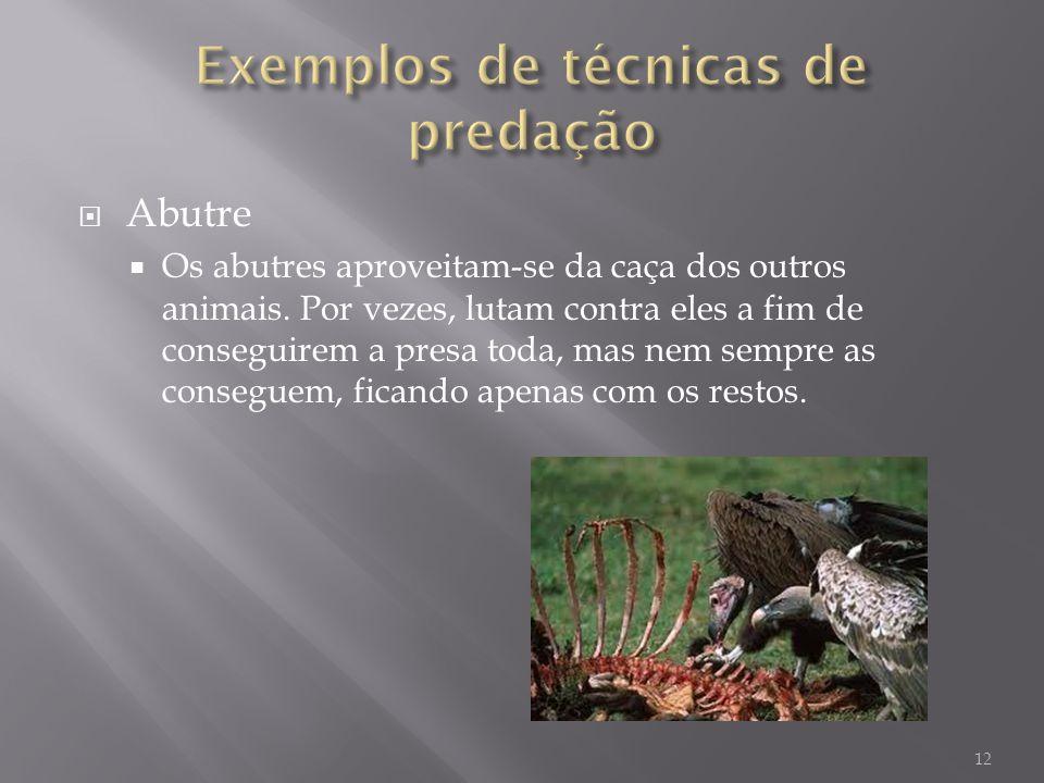 Exemplos de técnicas de predação