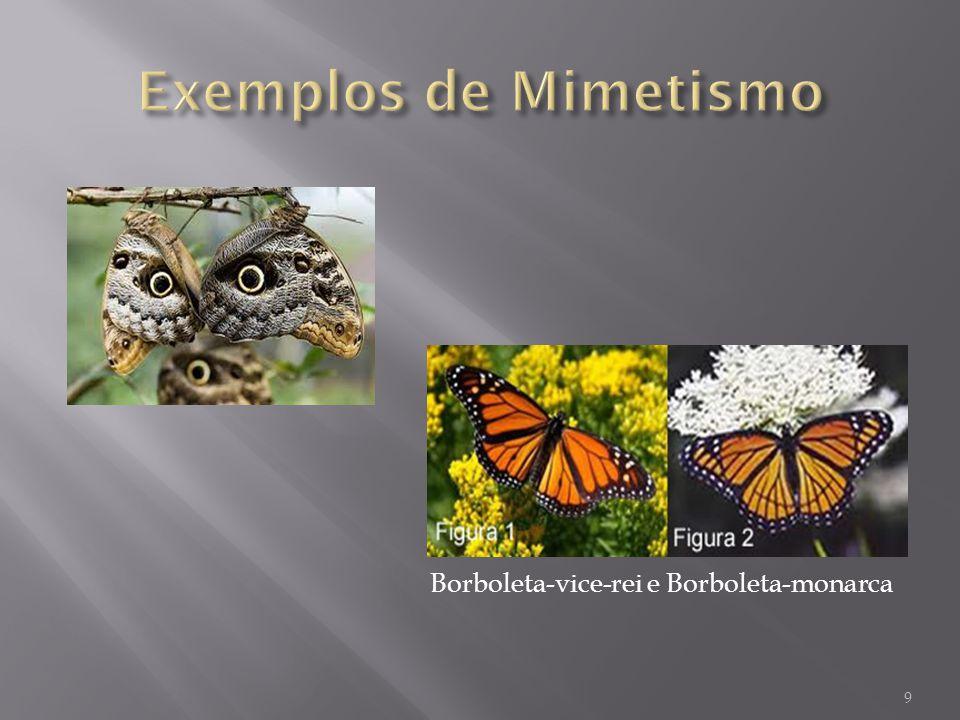 Exemplos de Mimetismo Borboleta-vice-rei e Borboleta-monarca