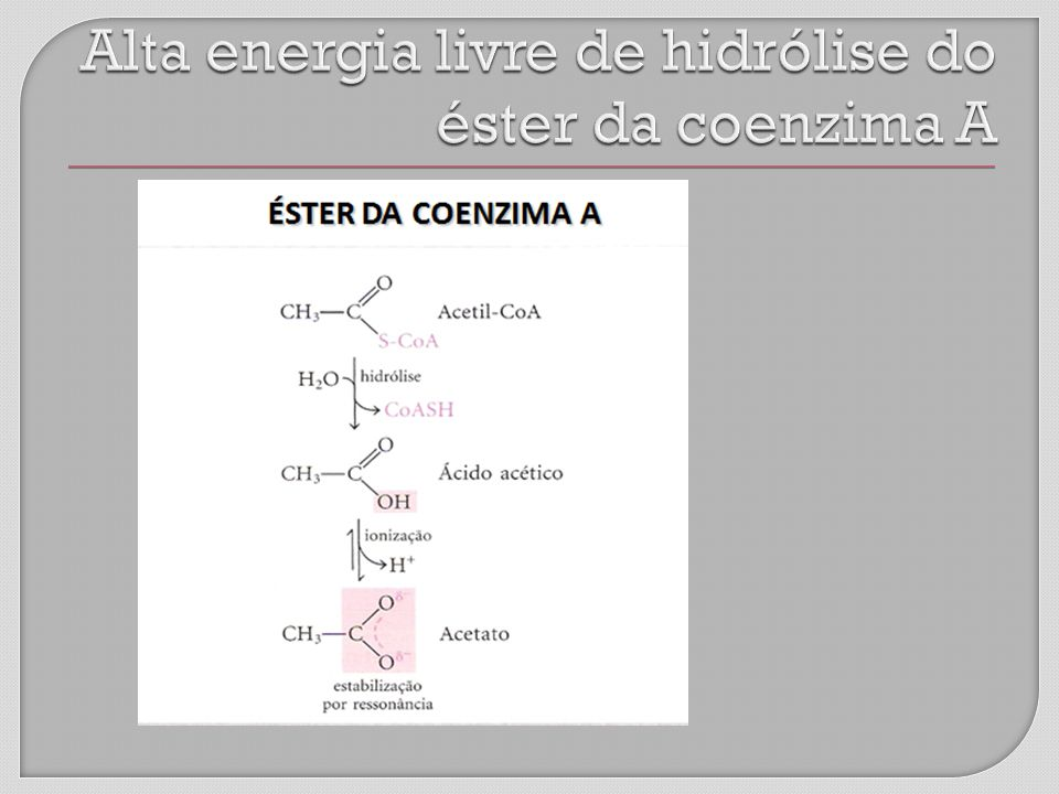 Alta energia livre de hidrólise do éster da coenzima A