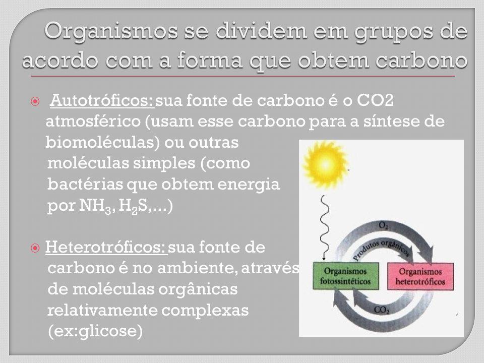 Organismos se dividem em grupos de acordo com a forma que obtem carbono