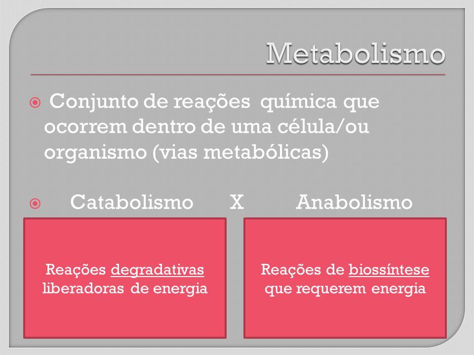 Metabolismo Conjunto de reações química que ocorrem dentro de uma célula/ou organismo (vias metabólicas)