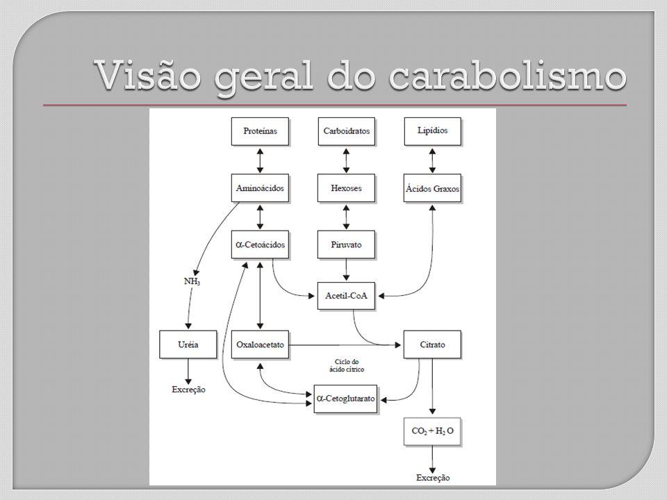 Visão geral do carabolismo