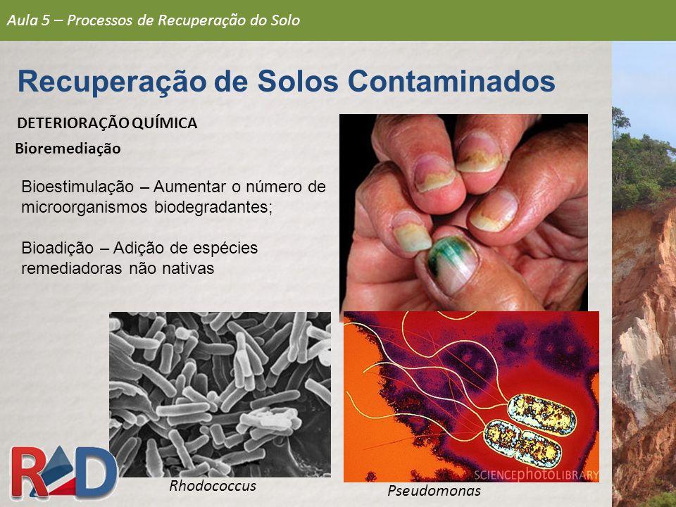 Recuperação de Solos Contaminados