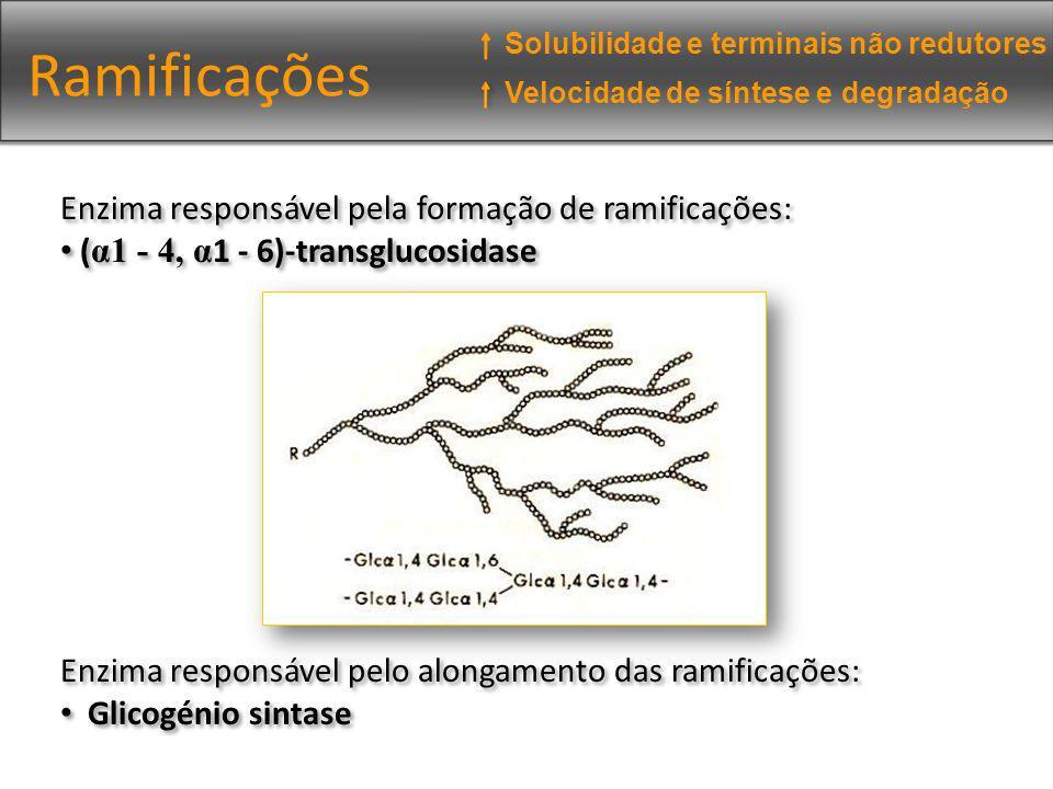 Ramificações Enzima responsável pela formação de ramificações: