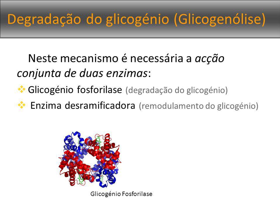 Degradação do glicogénio (Glicogenólise)