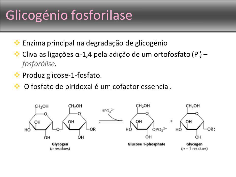 Glicogénio fosforilase