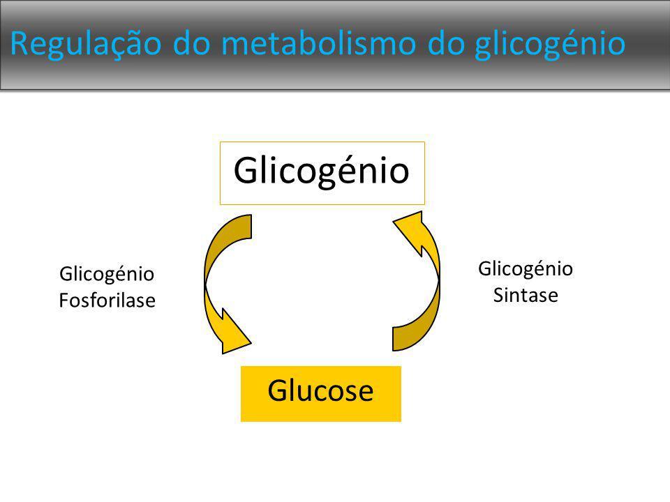Regulação do metabolismo do glicogénio