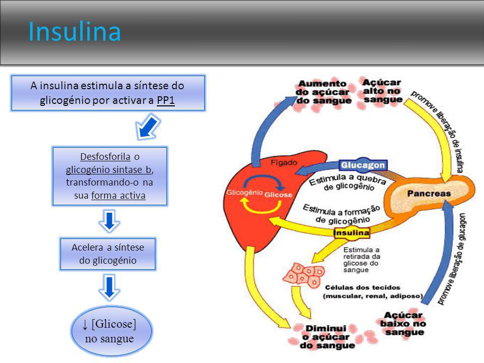Insulina A insulina estimula a síntese do glicogénio por activar a PP1