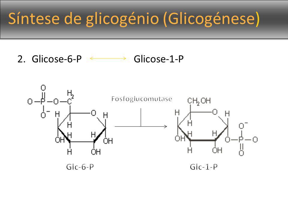 Síntese de glicogénio (Glicogénese)