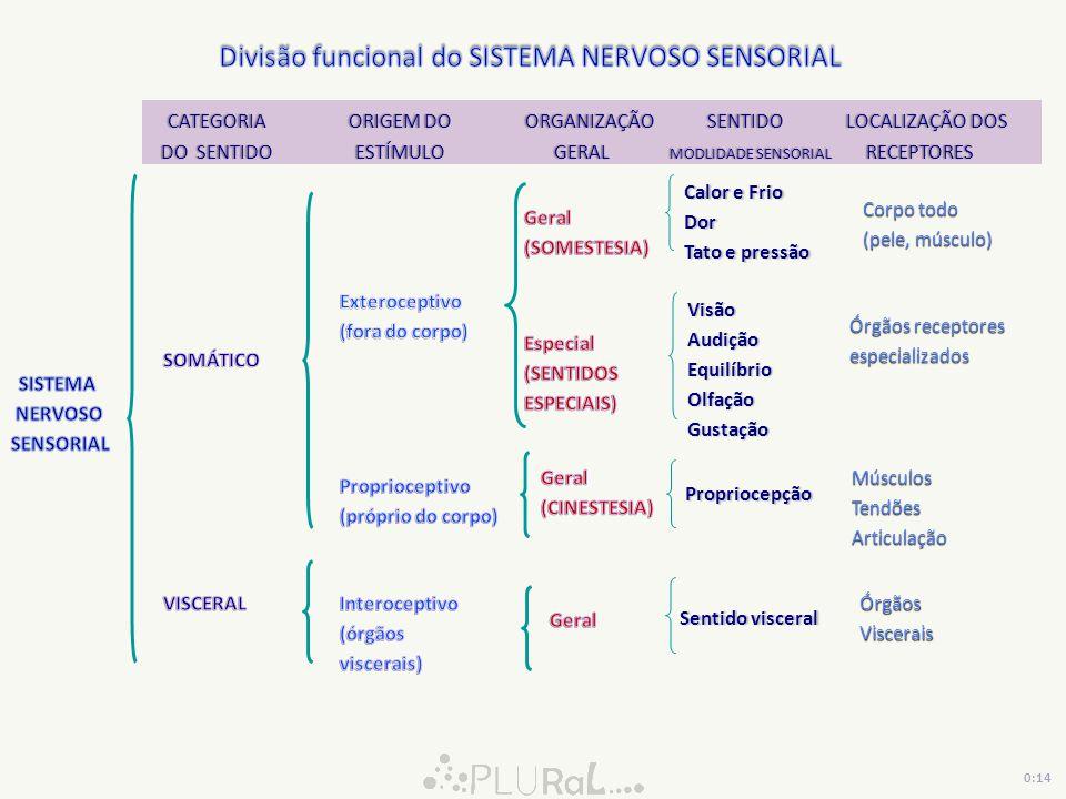 Divisão funcional do SISTEMA NERVOSO SENSORIAL