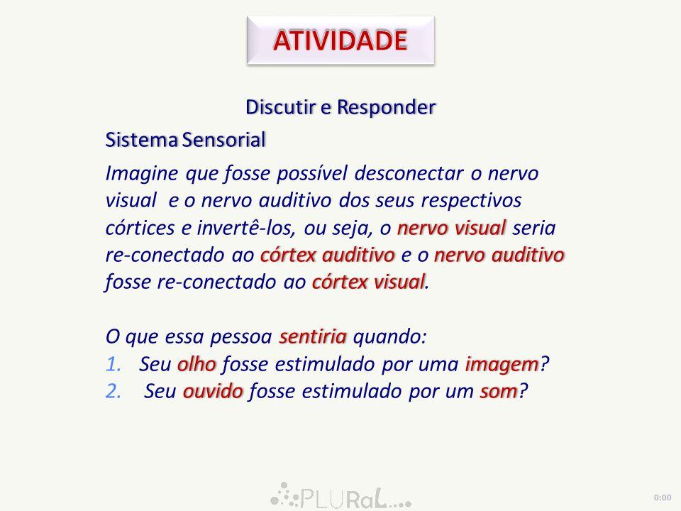 ATIVIDADE Discutir e Responder Sistema Sensorial