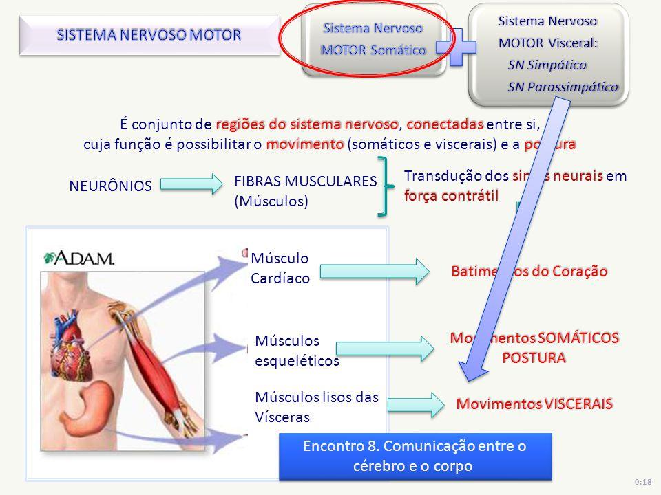 É conjunto de regiões do sistema nervoso, conectadas entre si,