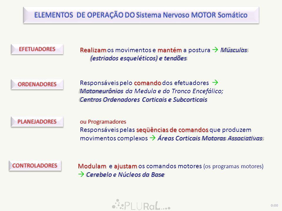 ELEMENTOS DE OPERAÇÃO DO Sistema Nervoso MOTOR Somático