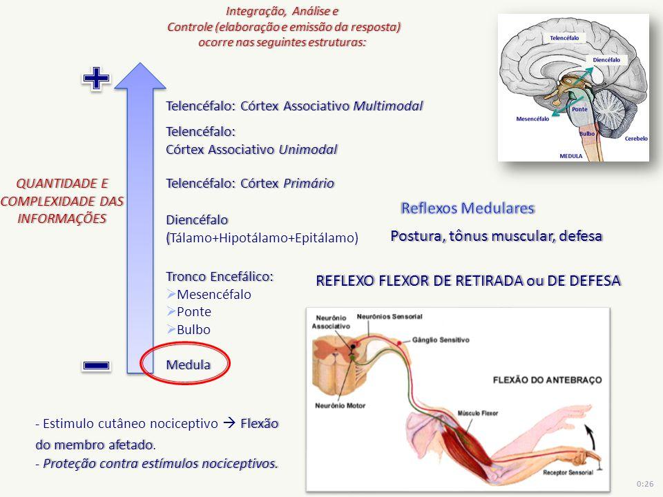 Postura, tônus muscular, defesa