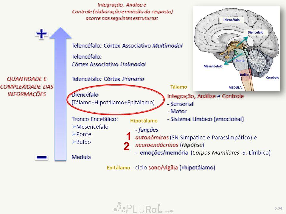 1 2 Telencéfalo: Córtex Associativo Multimodal Telencéfalo: