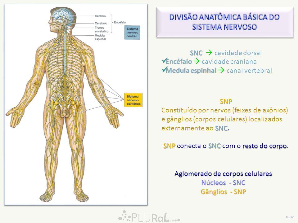 DIVISÃO ANATÔMICA BÁSICA DO SISTEMA NERVOSO